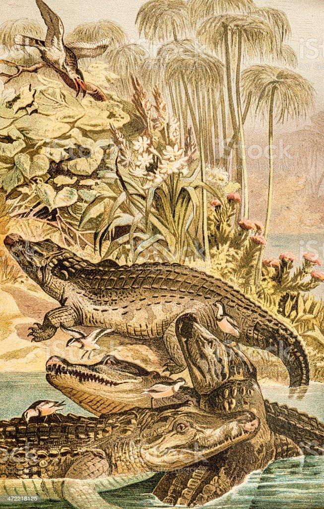 Ilustración de Color Antiguo Ilustración De Cocodrilo Del Nilo y más ...