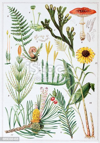 Antique colored illustrations: Plants
