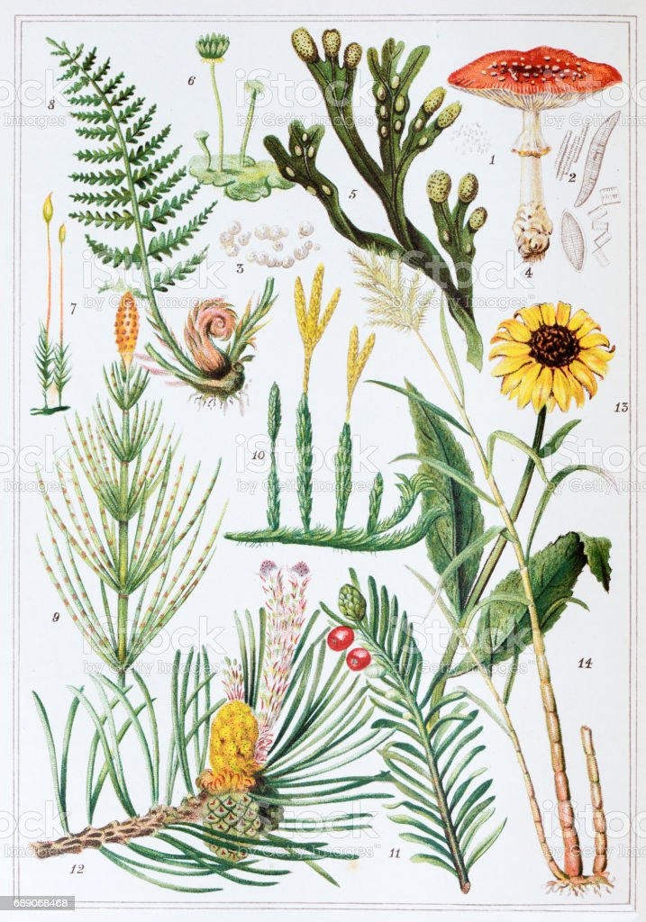 Antique colored illustrations: Plants vector art illustration