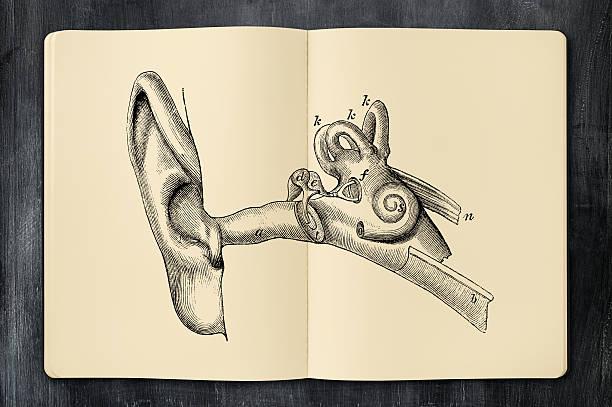 Antique ear illustration in opened notebook vector art illustration