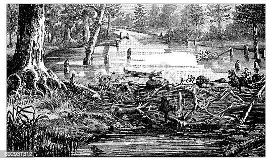 Antique engraving illustration: Beaver's dam