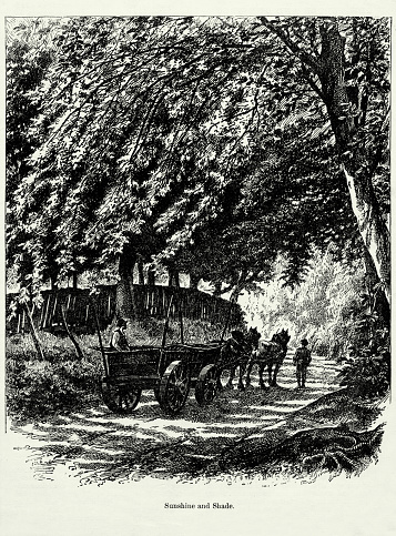 Antique Engraving: Sunshine and Shade Engraving