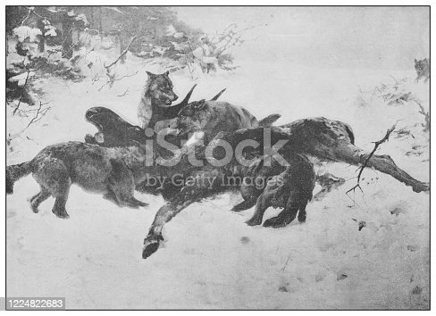 Antique famous painting from the 19th century: A drama of the woods by Karl Uchermann