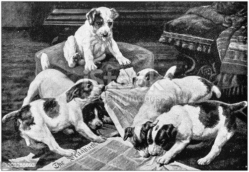 Antique Illustration: Dog puppies eating newspaper