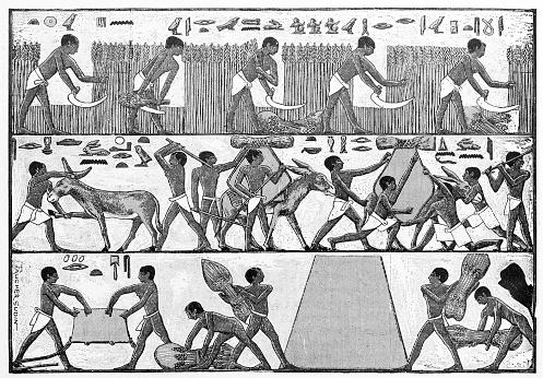 Antique illustration: Egyptian farmers hieroglyph