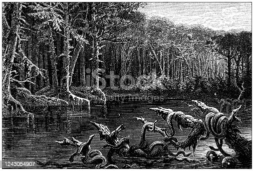 Antique illustration: Florida fever swamp