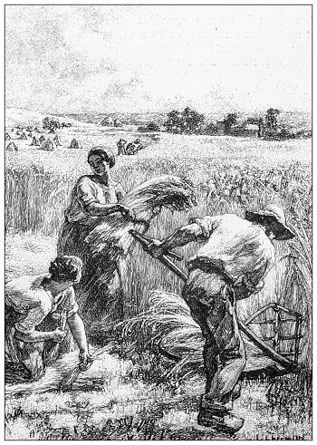 Antique illustration: Harvesting