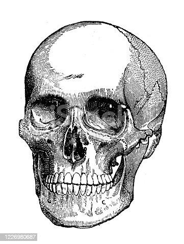 Antique illustration: human skull
