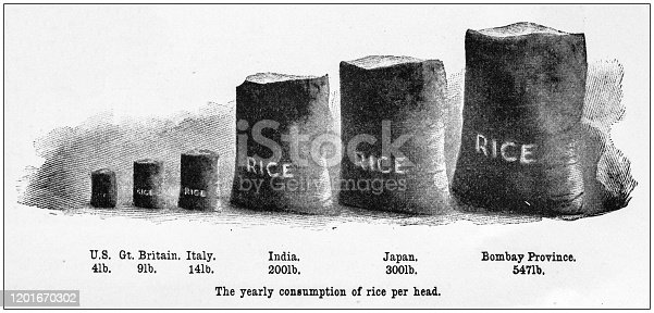 Antique Illustration infographic: Yearly consumption of rice per country