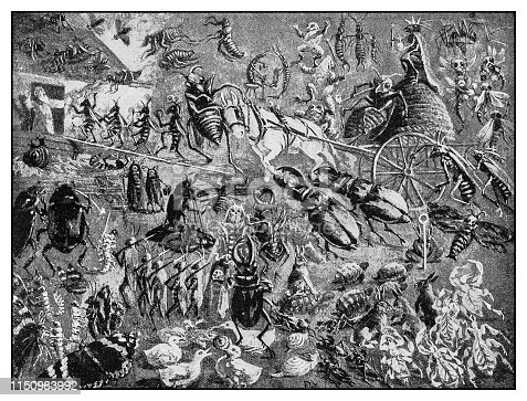 istock Antique illustration: Insect Battle 1150983992