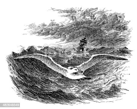 Antique illustration of Albatross