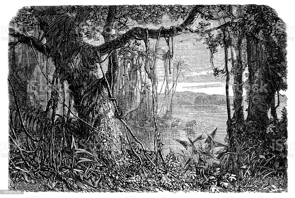 Antique illustration of Amazon rainforest vector art illustration