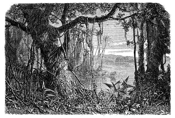 Antique illustration of Amazon rainforest Antique illustration of Amazon rainforest amazon stock illustrations