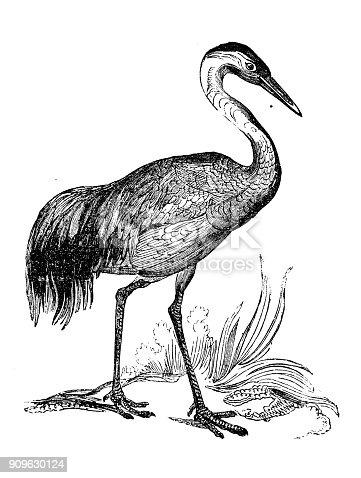 Antique illustration of animals: Crane