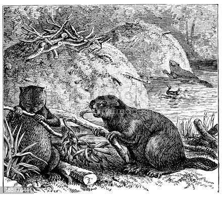 Antique illustration of beavers and beaver-lodge