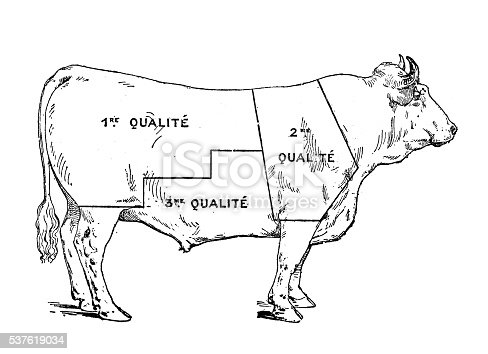 Antique illustration of beef meat section