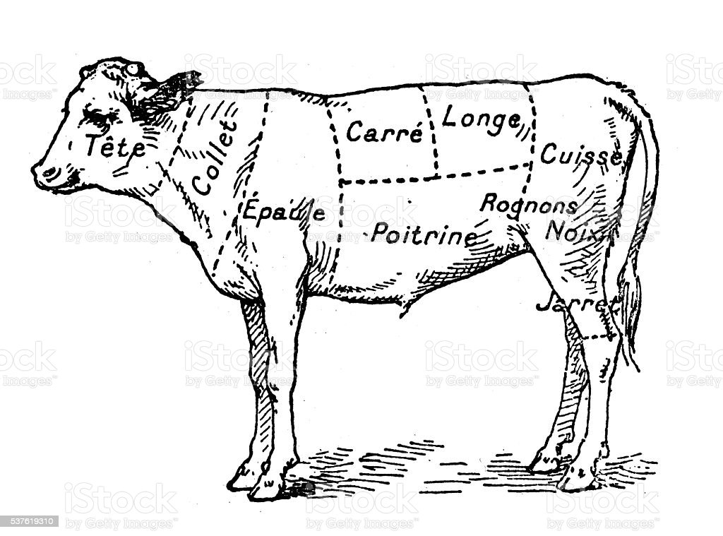 Antique illustration of beef veal meat section (french) vector art illustration