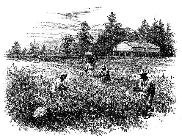 Antique illustration of cotton field with workers vector art illustration