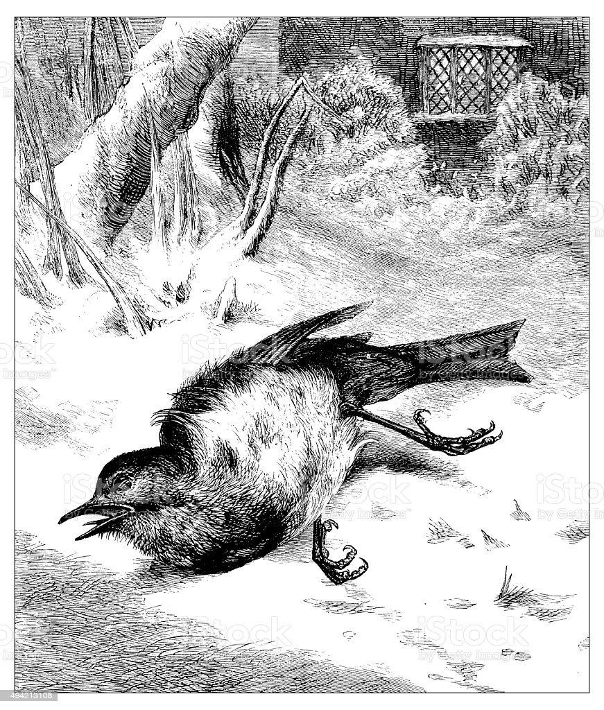 Antique illustration of dead bird vector art illustration