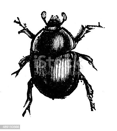 istock Antique illustration of dor beetle (Geotrupes stercorarius) 489150566