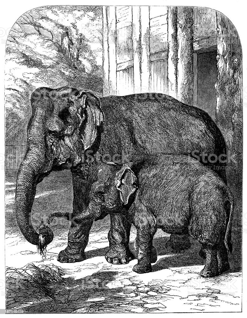 Antique illustration of elephants royalty-free stock vector art