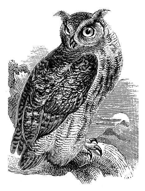 antique illustration of eurasian eagle-owl (bubo bubo) - black and white owl stock illustrations, clip art, cartoons, & icons
