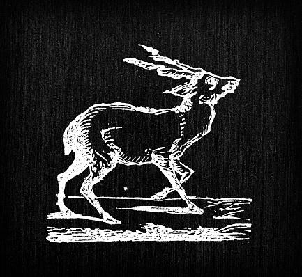 Antique illustration of fallow deer