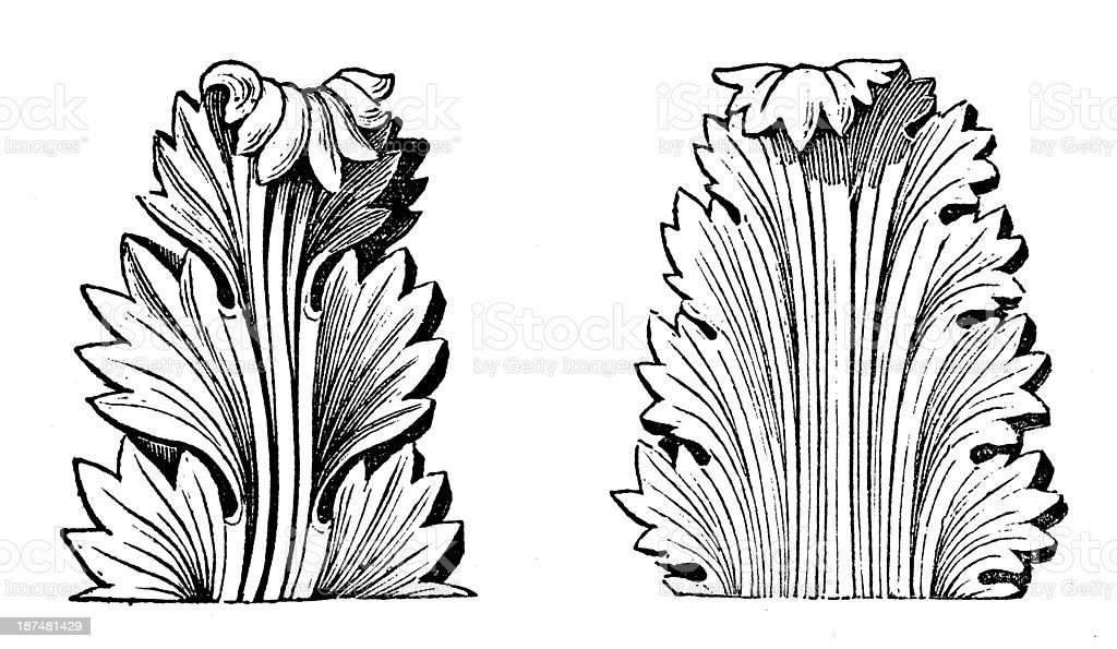 Antique illustration of Greek Acanthus (ornament) vector art illustration