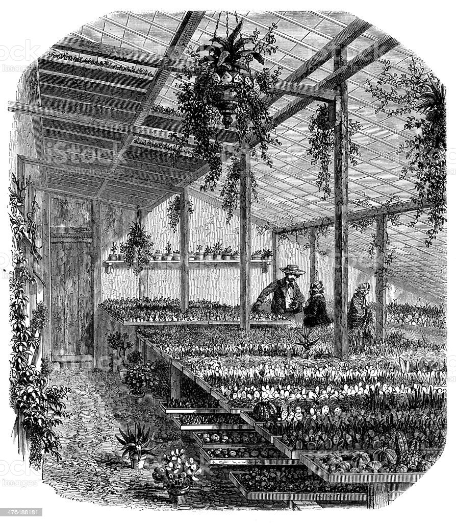 Antique illustration of greenhouse royalty-free stock vector art
