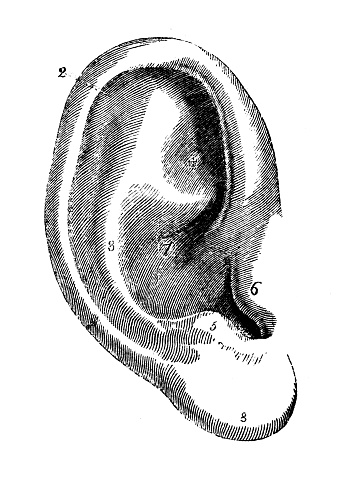 Antique illustration of human body anatomy: Ear