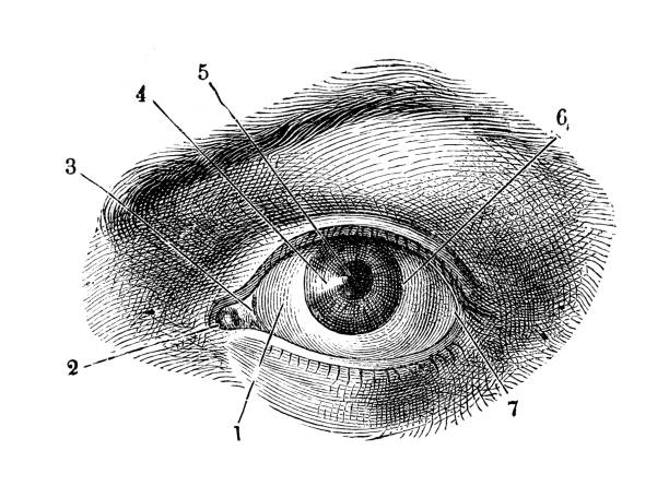 antique illustration of human body anatomy: human eye - сетчатка stock illustrations