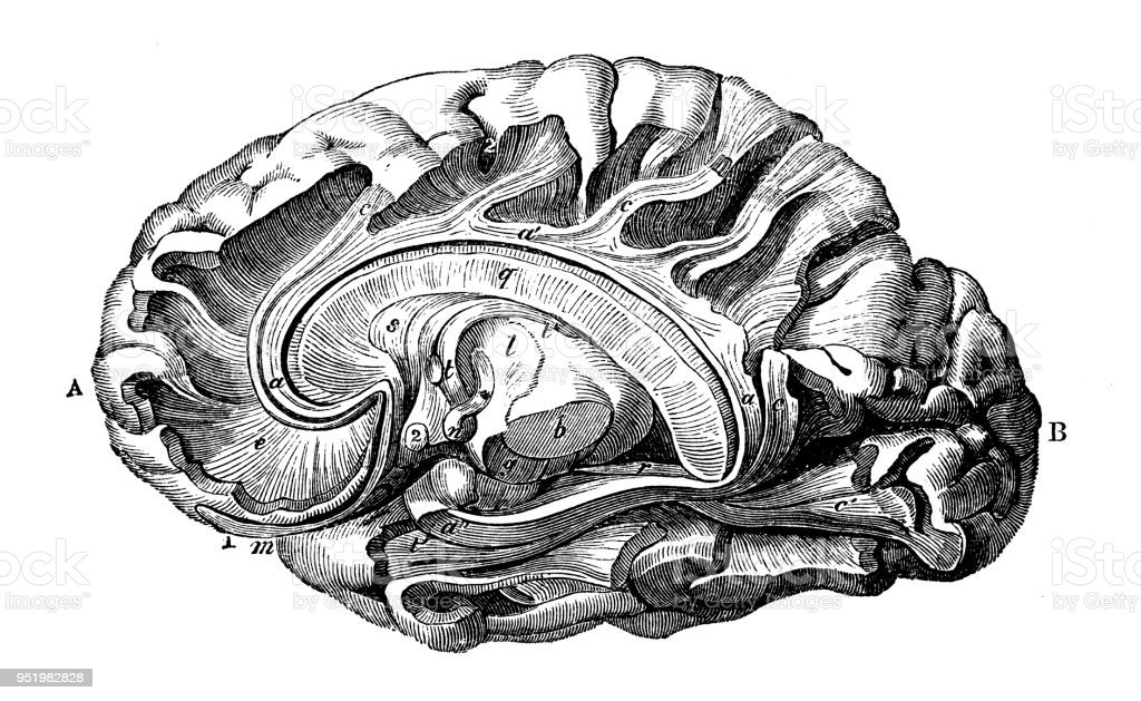 Atemberaubend Grundbegriffe Der Anatomie Des Gehirns Bilder ...