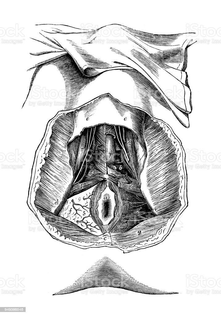 Großartig Pferdegesicht Anatomie Ideen - Menschliche Anatomie Bilder ...