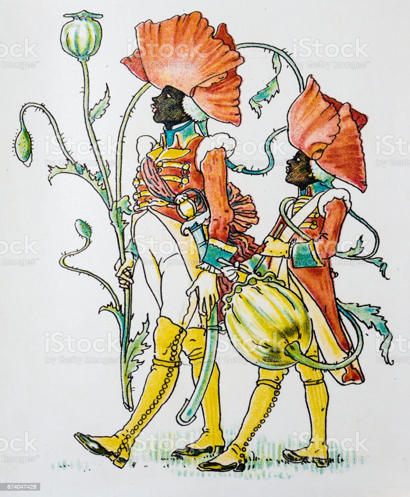 Antique illustration of humanized flowers and plants: Poppy vector art illustration