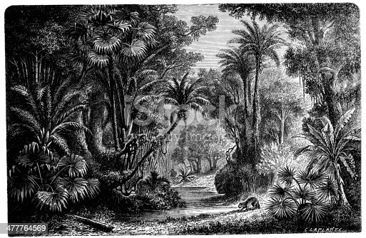 Antique illustration of Indian jungle