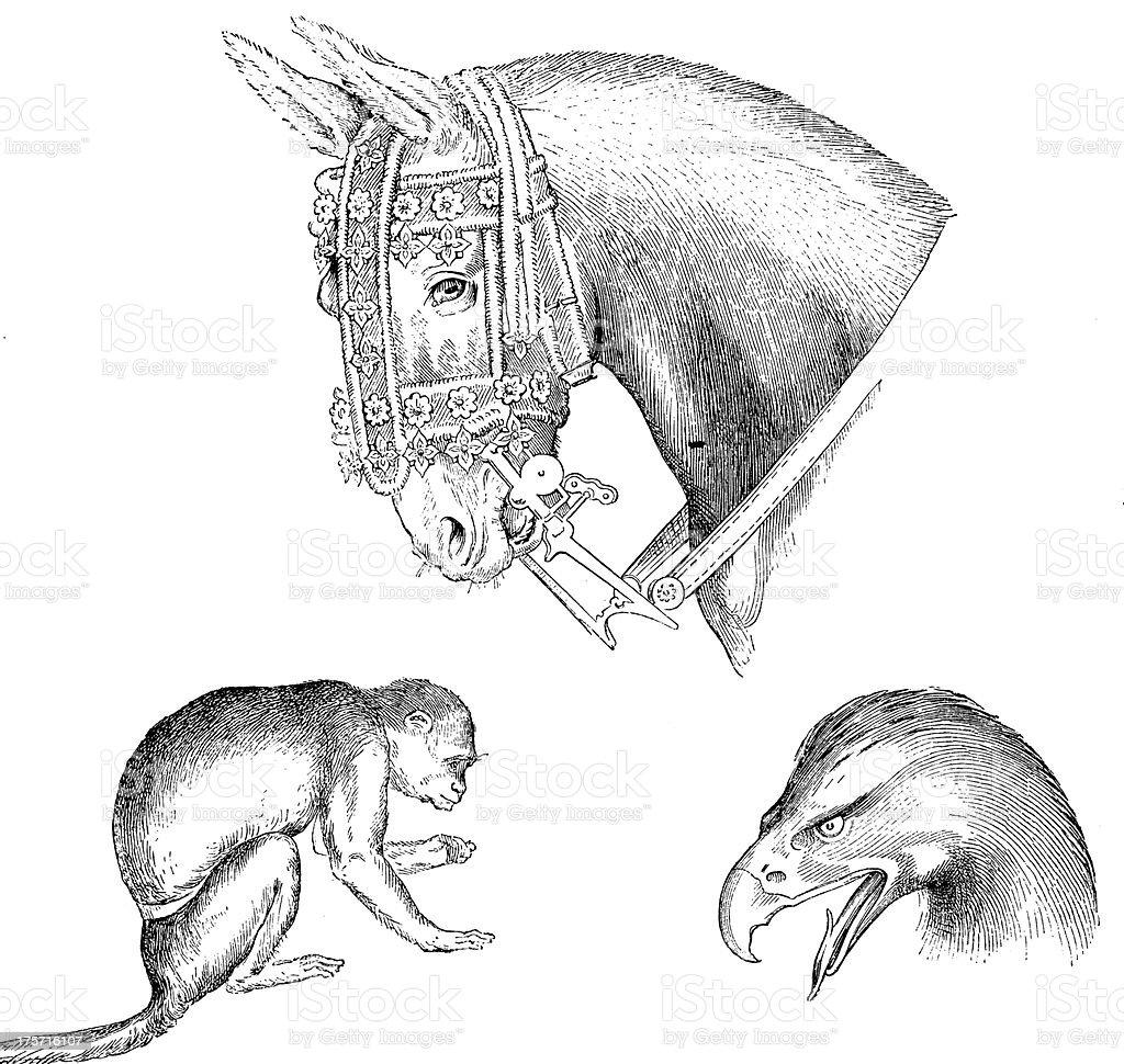 Antique illustration of Leonardo da Vinci animals drawings royalty-free stock vector art