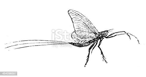 istock Antique illustration of Mayfly or shadfly Ephemeroptera 454098557