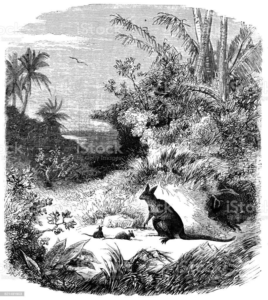 Antique illustration of opossum family vector art illustration
