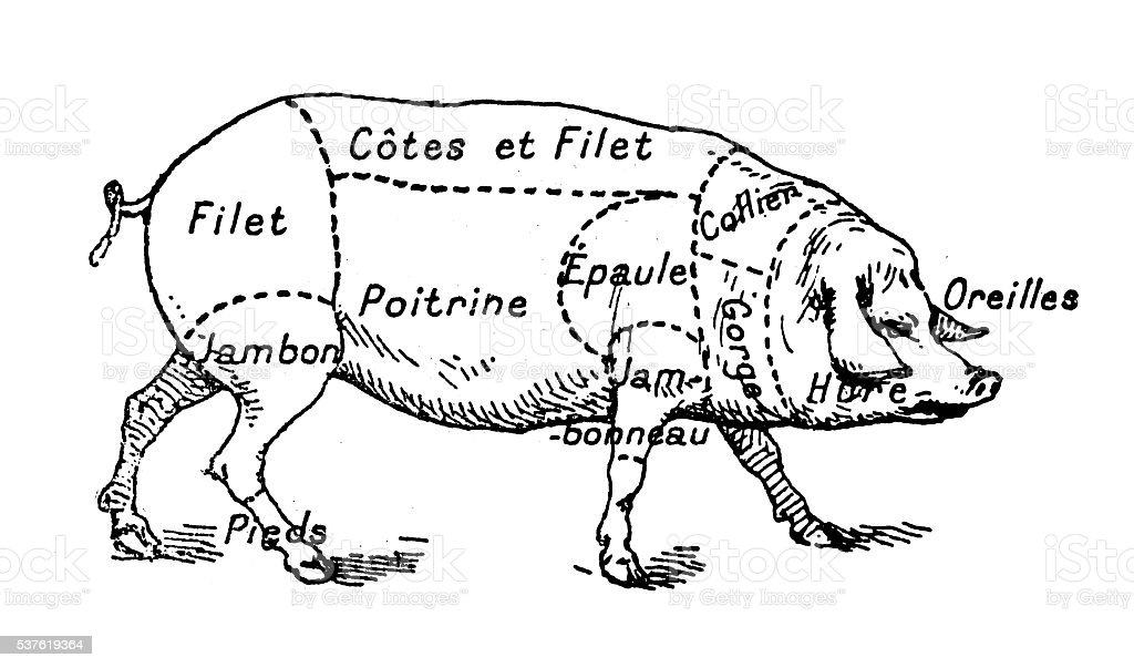 Antique illustration of pork swine pig meat section (french) vector art illustration