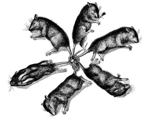 Best Rat Illustrations, Royalty-Free Vector Graphics