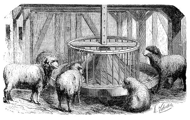 Sheep Pen Illustrations, Royalty-Free Vector Graphics ...