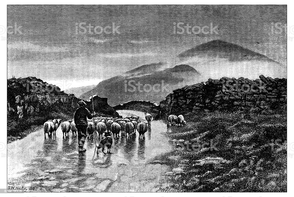 Antique illustration of shepherd vector art illustration