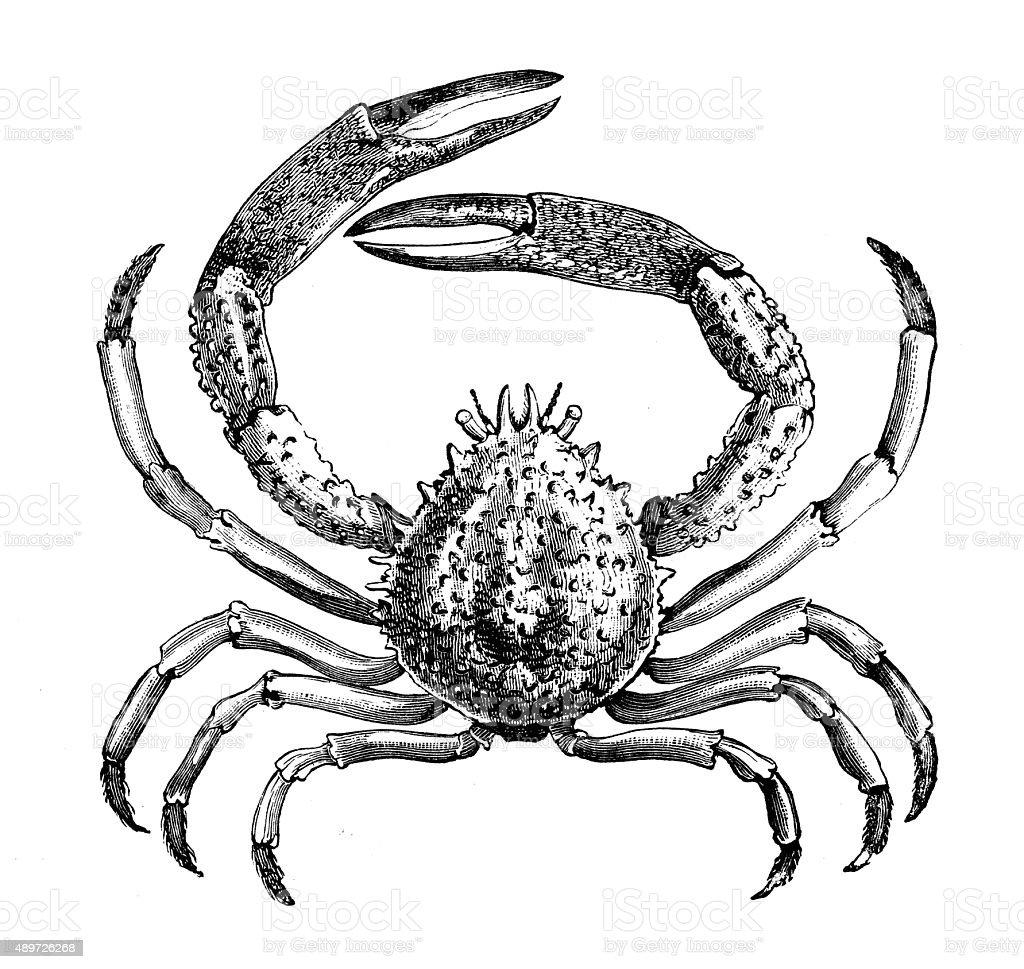 Exelent King Crab Anatomy Pictures - Anatomy Ideas - yunoki.info