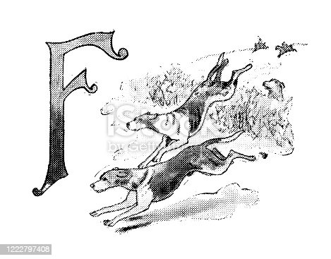 Antique illustration of sports and leisure activities: Capital letter F and Fox hunting