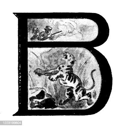 Antique illustration of sports and leisure activities: Capital letter B and Tiger hunt