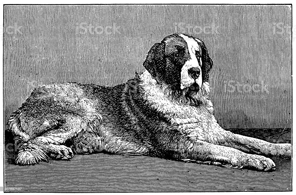 Antique illustration of St Bernard Dog vector art illustration