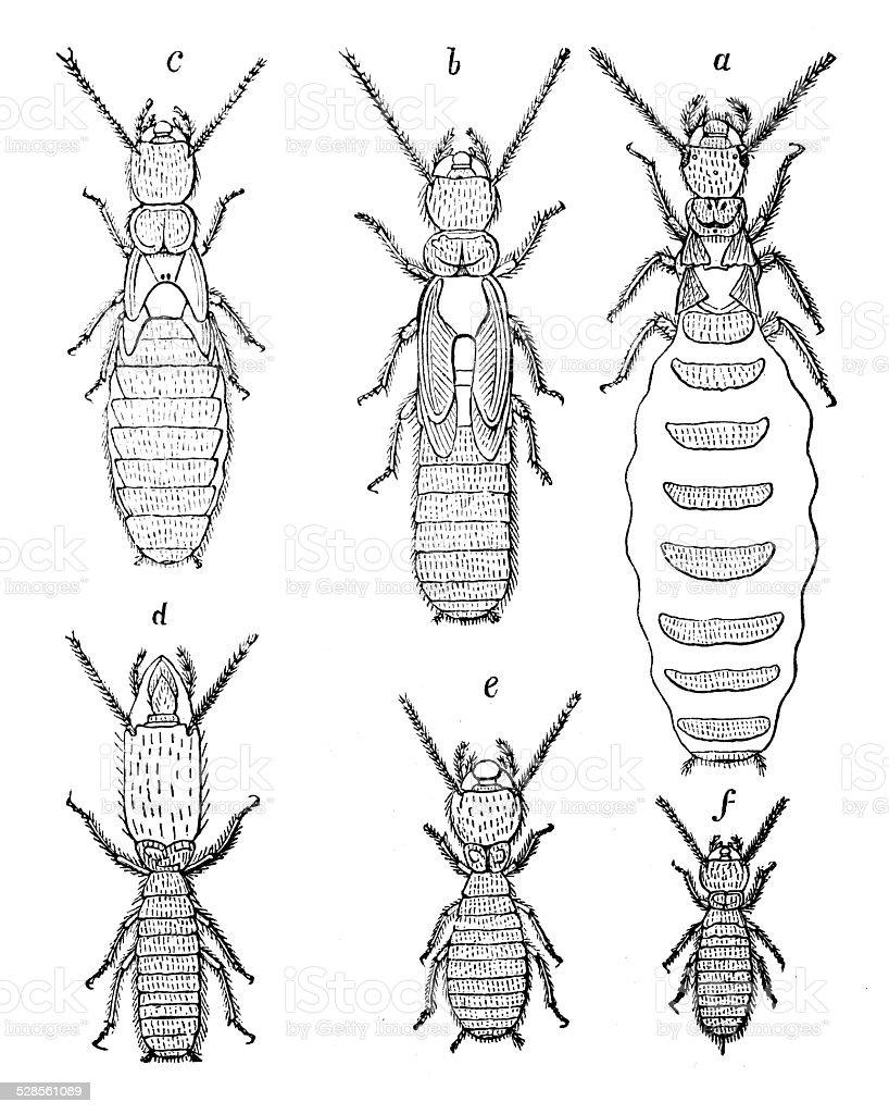 Ilustración de Anticuario Ilustración De Termitas y más banco de ...