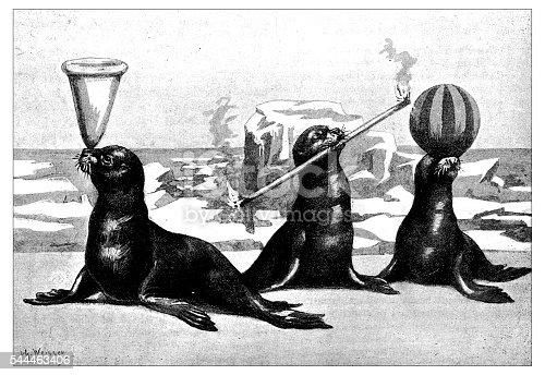 Antique illustration of trained seals