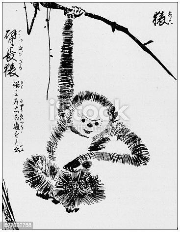 istock Antique Japanese Illustration: Monkey by Tachibana Morikuni 827662758