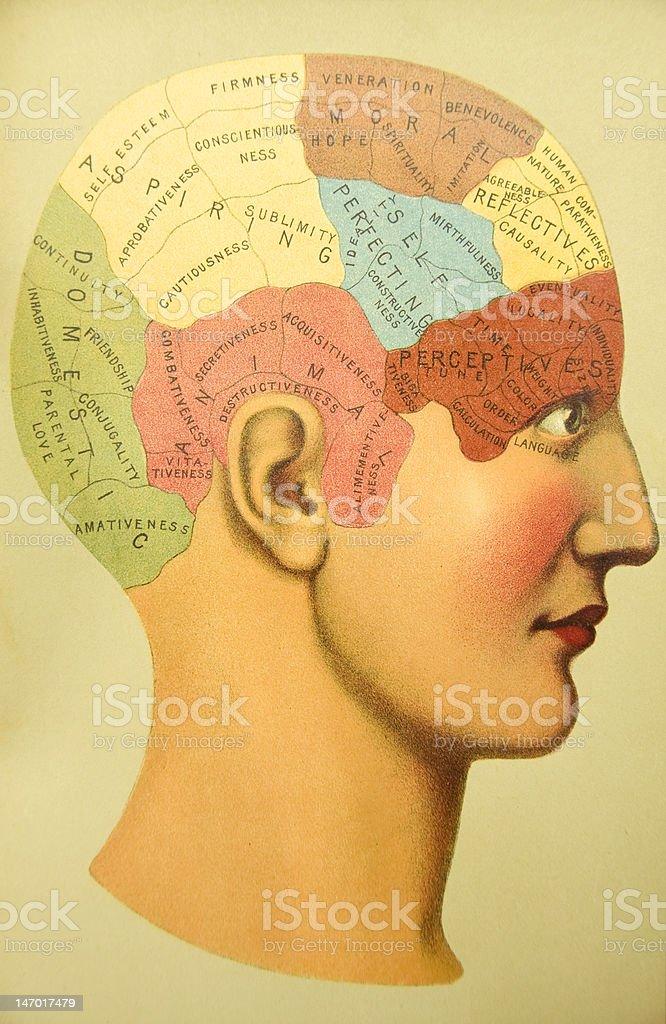 アンティーク医療イラストレーション/Phrenology 1884 - 1人のロイヤリティフリーストックイラストレーション